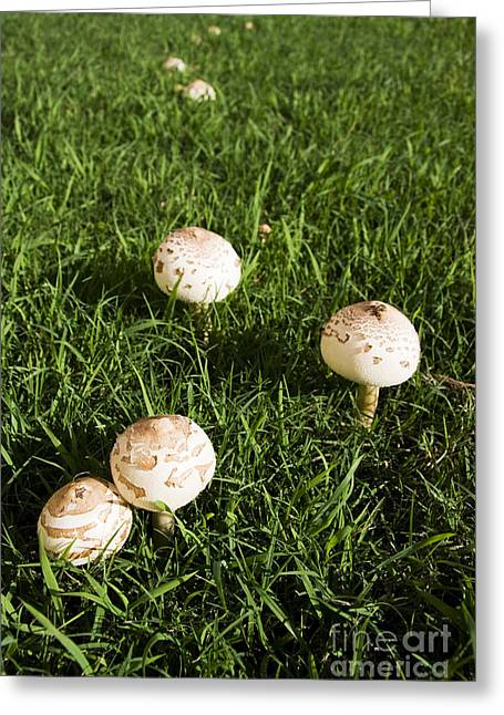 Magic Mushrooms Greeting Cards - Field Of Mushrooms Greeting Card by Ryan Jorgensen