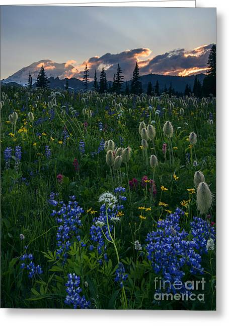 Mt Greeting Cards - Fields of Paradise Greeting Card by Mike Dawson