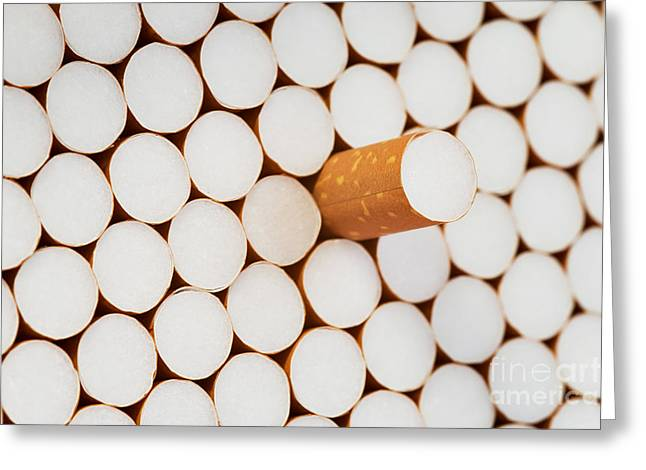 Harmful Greeting Cards - Filter Cigarettes Greeting Card by Michal Boubin