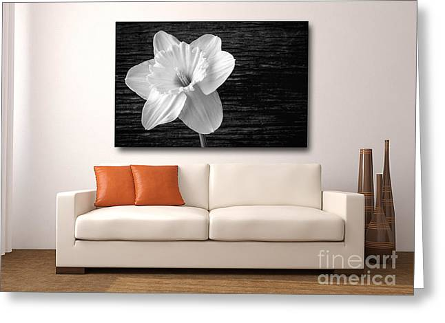 Flower Display Greeting Cards - Fine art photography in the home Greeting Card by Edward Fielding