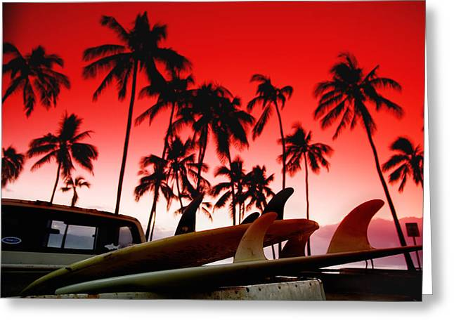 Coconut Trees Greeting Cards - Fins n Palms Greeting Card by Sean Davey