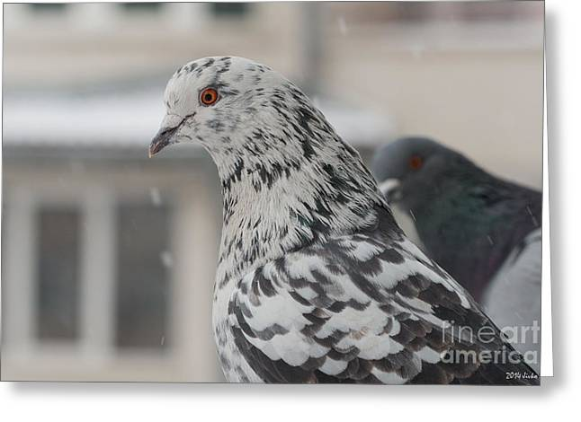 Feral Pigeon Greeting Cards - First Snow Greeting Card by Jivko Nakev
