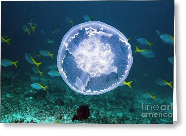 Jelly Fish Greeting Cards - Fish And Jellyfish Over A Coral Reef Greeting Card by Georgette Douwma