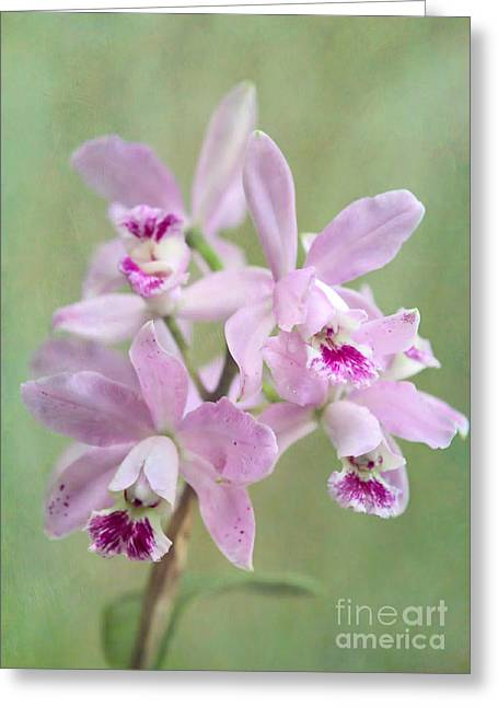 Five Beautiful Pink Orchids Greeting Card by Sabrina L Ryan