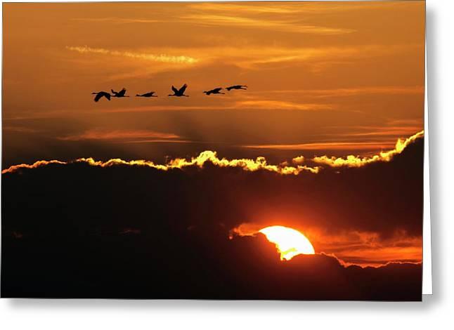 Flamingos At Sunset Greeting Card by Babak Tafreshi