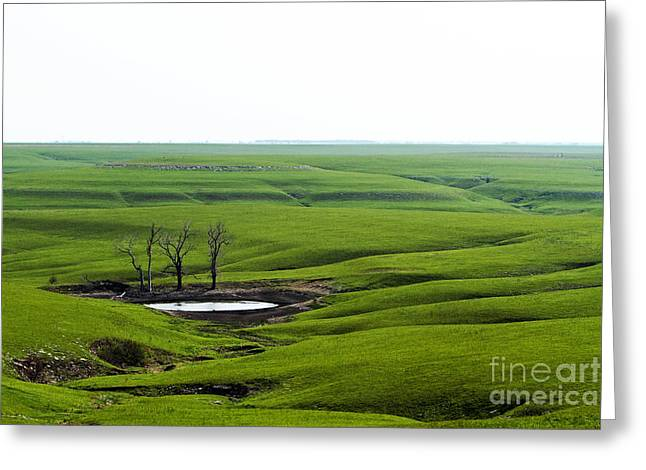 Uncrowded Greeting Cards - Flint Hills Spring Greeting Card by Betty Morgan