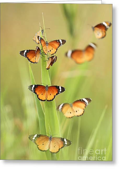 Flock Of Plain Tiger Danaus Chrysippus Greeting Card by Alon Meir