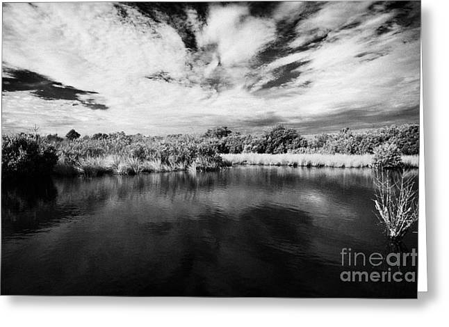 flooded grasslands and mangrove forest in the florida everglades usa Greeting Card by Joe Fox