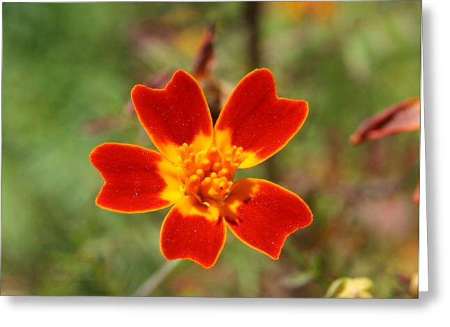 Wildflower Photos Greeting Cards - Floral Sunshine Greeting Card by Neal  Eslinger