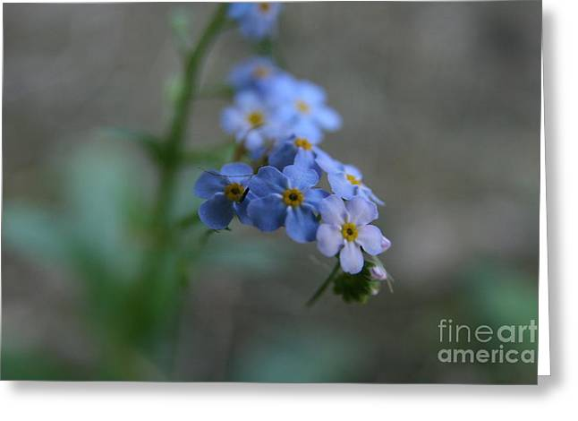 Wildflower Photos Greeting Cards - Floral View Greeting Card by Neal  Eslinger