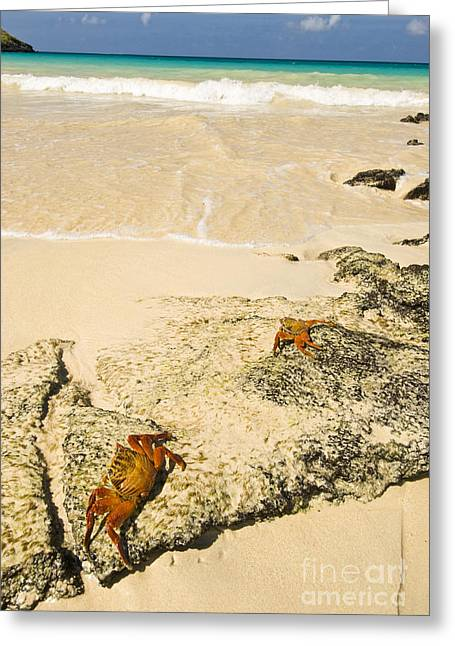 Blue Green Wave Greeting Cards - Floreana Island Greeting Card by William H. Mullins