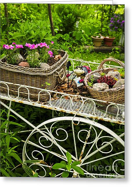 Iron Greeting Cards - Flower cart in garden Greeting Card by Elena Elisseeva