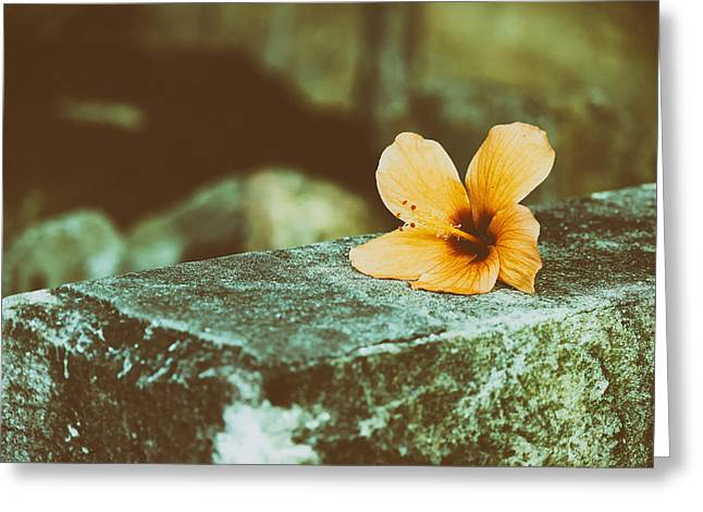 Ledge Photographs Greeting Cards - Flower on a Ledge Greeting Card by Mountain Dreams