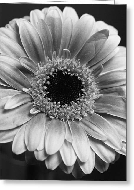 Imaginative Greeting Cards - Macro Flower Perfection Greeting Card by Marcio Faustino