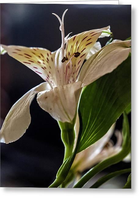 Flower Greeting Card by Robert Ullmann