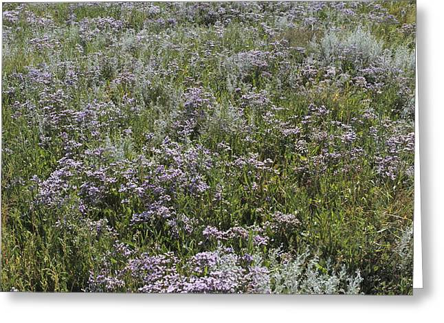 Limonium Greeting Cards - Flowering Lamsoor Greeting Card by Ronald Jansen
