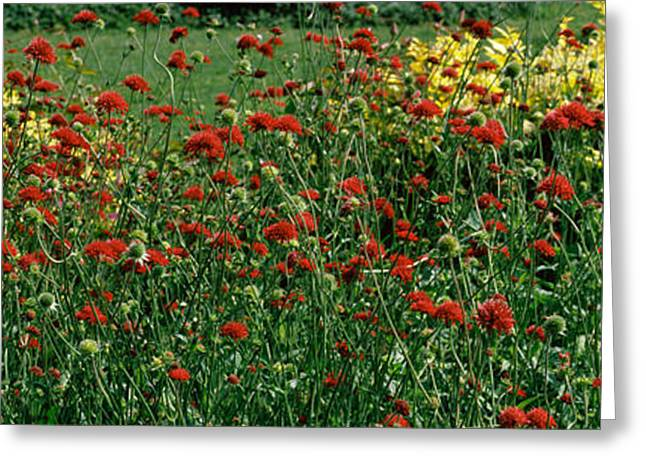 Botanical Greeting Cards - Flowers In A Botanical Garden, Buffalo Greeting Card by Panoramic Images
