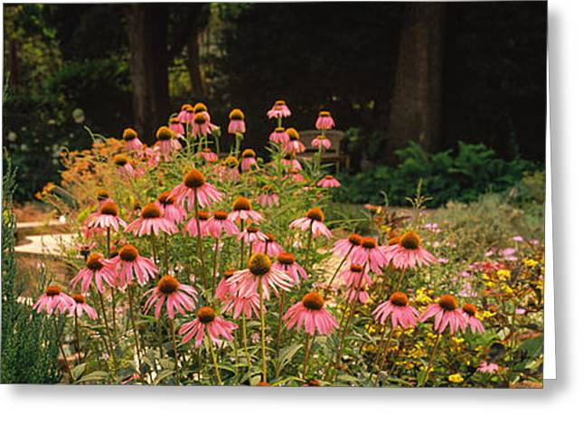 Garden Scene Photographs Greeting Cards - Flowers In A Garden, California, Usa Greeting Card by Panoramic Images