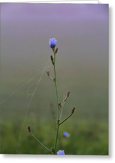 Haze Greeting Cards - Spring Morning Greeting Card by Dan Sproul
