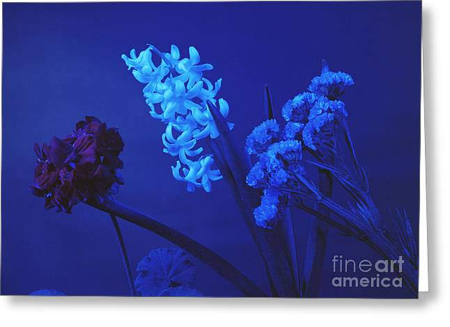 Absorb Greeting Cards - Flowers Under Blue Light Greeting Card by Andrew Lambert Photography