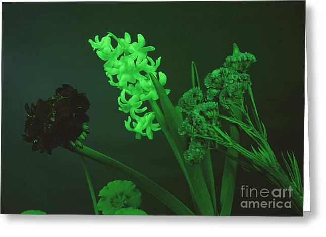 Absorb Greeting Cards - Flowers Under Green Light Greeting Card by Andrew Lambert Photography