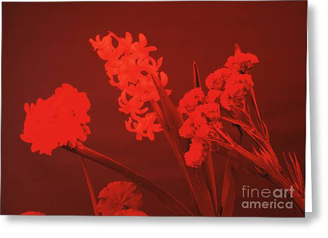 Absorb Greeting Cards - Flowers Under Red Light Greeting Card by Andrew Lambert Photography