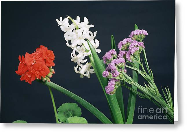 Absorb Greeting Cards - Flowers Under White Light Greeting Card by Andrew Lambert Photography