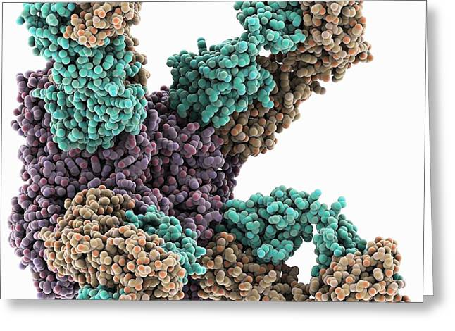 Neuraminidase Greeting Cards - Flu virus surface protein and antibody Greeting Card by Science Photo Library