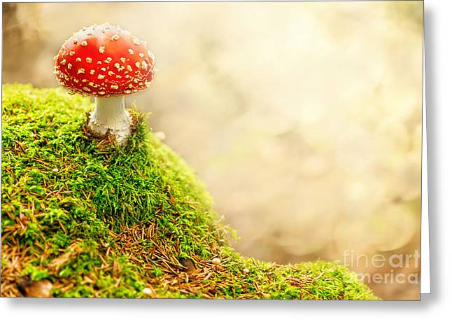 Fall Grass Pyrography Greeting Cards - Fly Agaric Greeting Card by Stefan Holm