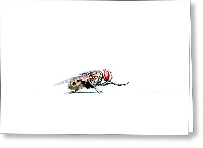 Flying Animal Mixed Media Greeting Cards - Fly Greeting Card by Toppart Sweden