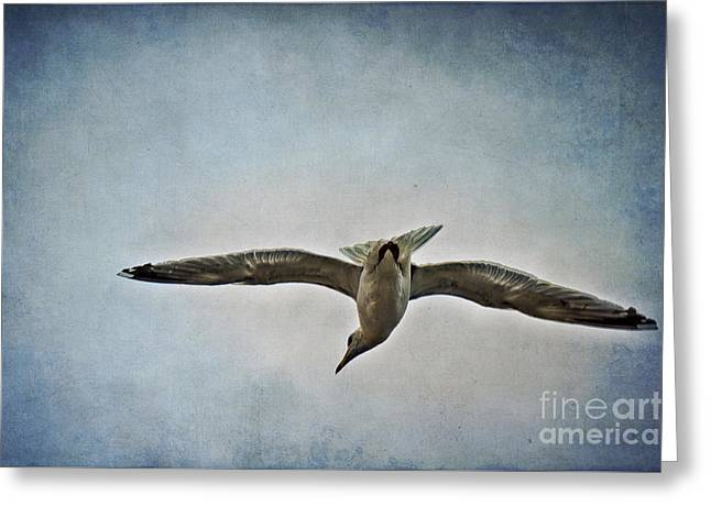 Flying Seagull Mixed Media Greeting Cards - Flying Greeting Card by Angela Doelling AD DESIGN Photo and PhotoArt