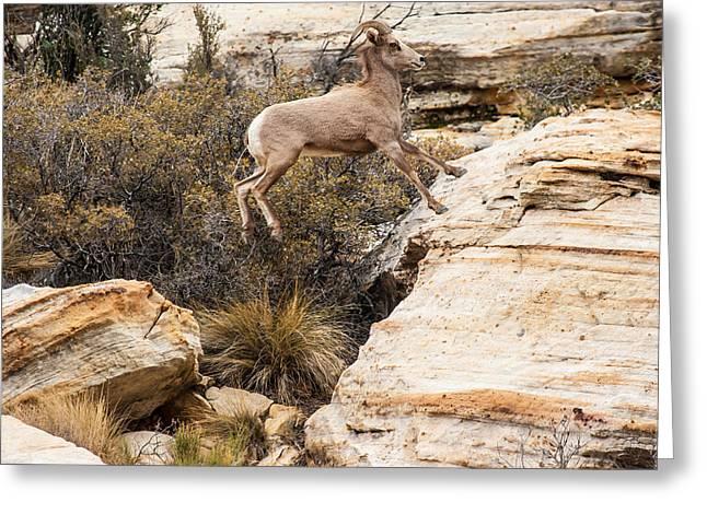 Southwest Wildlife Greeting Cards - Flying Ewe Greeting Card by James Marvin Phelps