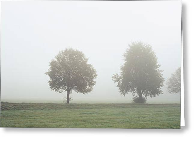 Fall Grass Greeting Cards - Fog Covered Trees In A Field Greeting Card by Panoramic Images