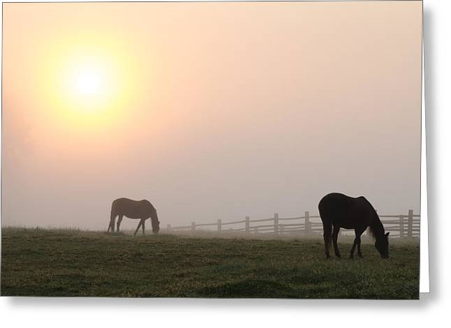 The Horse Greeting Cards - Foggy Morning Sunrise on the Farm Greeting Card by Bill Cannon
