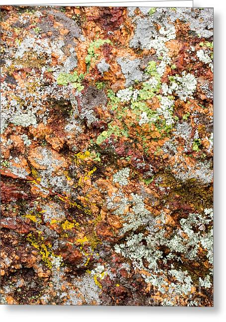 Red Granite Greeting Cards - Foliose Lichens On Red Granite Greeting Card by Gregory G. Dimijian