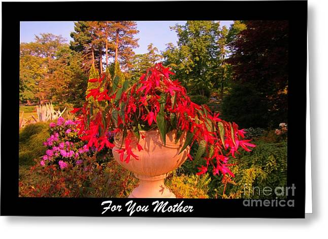 Halifax Photography Halifax Nova Scotia Greeting Cards - For You Mother Greeting Card by John Malone