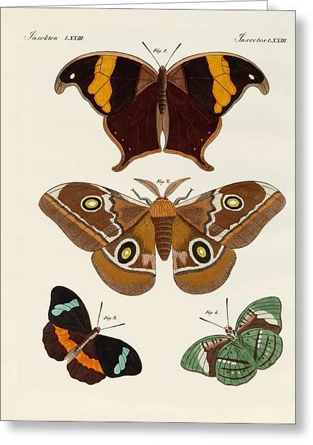 Foreign Butterflies Greeting Card by Splendid Art Prints
