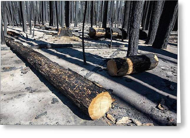 Forest Fire Greeting Card by Ashley Cooper