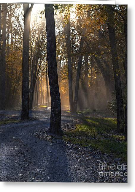 Enlightened Path Greeting Cards - Forest Glow Greeting Card by Larry Braun