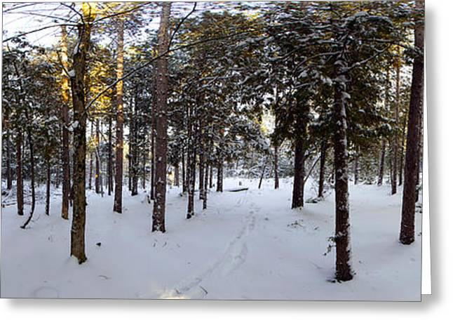 Quebec Scenes Greeting Cards - Forest In Winter, Quebec, Canada Greeting Card by Panoramic Images