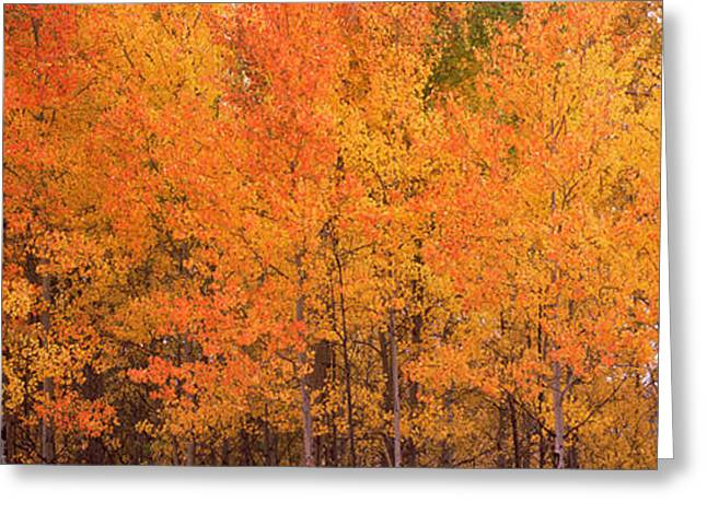 Autumn Colors Greeting Cards - Forest, Jackson, Jackson Hole, Teton Greeting Card by Panoramic Images