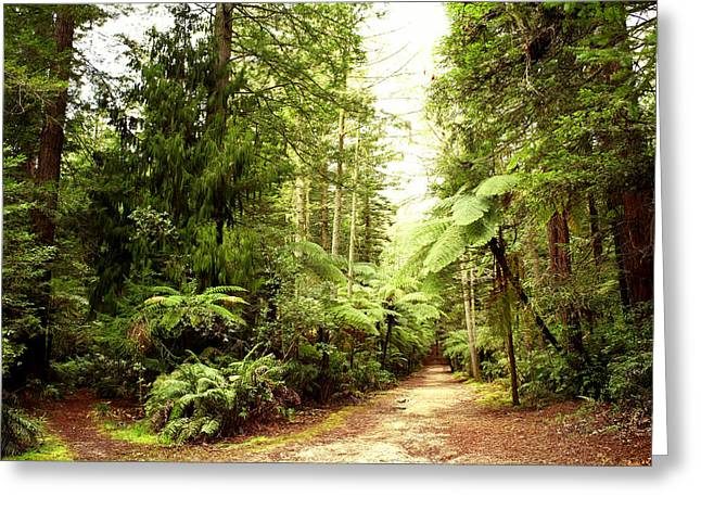 Woodland Scenes Greeting Cards - Forest Greeting Card by Les Cunliffe