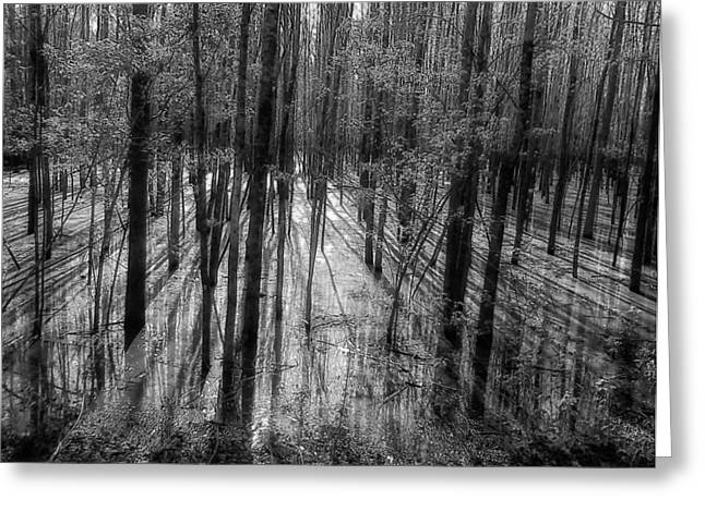 Flooding Greeting Cards - Forest Reflections Greeting Card by Mountain Dreams