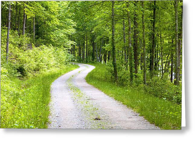 Gravel Road Greeting Cards - Forest road Greeting Card by Alexey Stiop