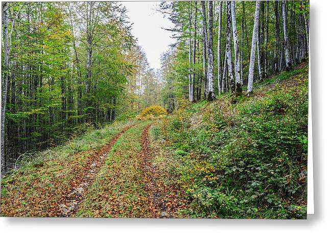 Green Day Greeting Cards - Forest road Greeting Card by Tilyo Rusev