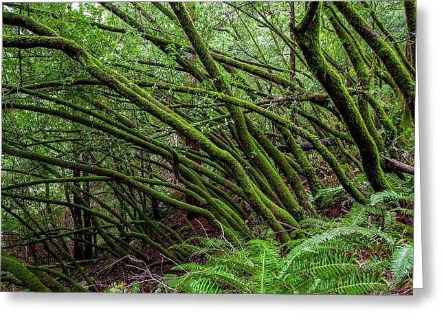 Forest Scene In Muir Woods State Park Greeting Card by James White