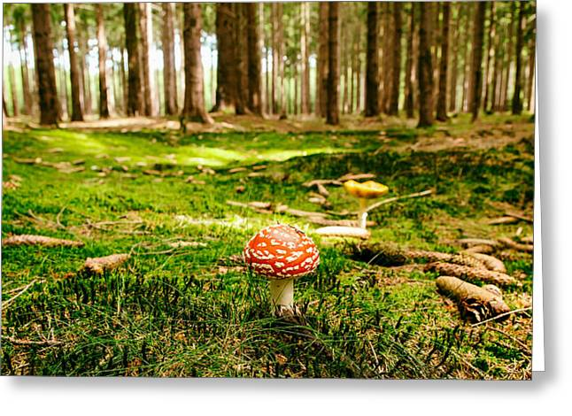 Wet Grass Greeting Cards - Forest Treasure Greeting Card by Mountain Dreams