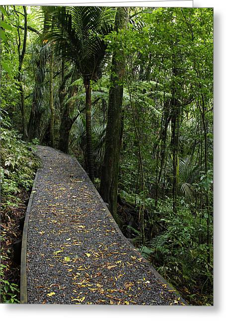 Pathways Greeting Cards - Forest walk Greeting Card by Les Cunliffe