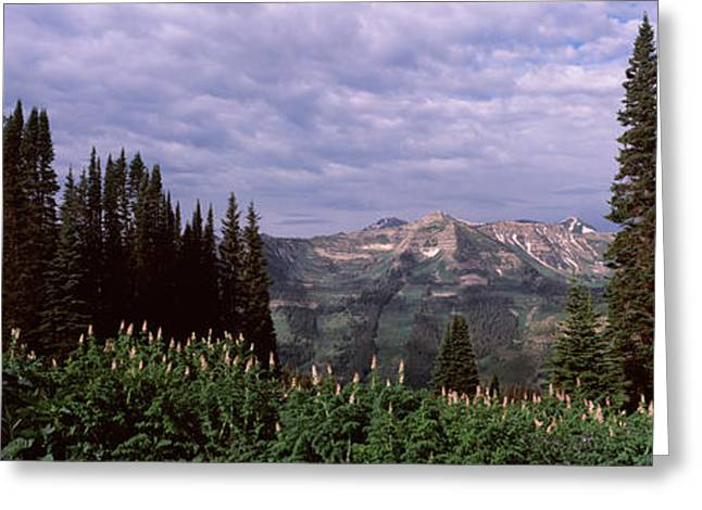 Crested Butte Greeting Cards - Forest, Washington Gulch Trail, Crested Greeting Card by Panoramic Images