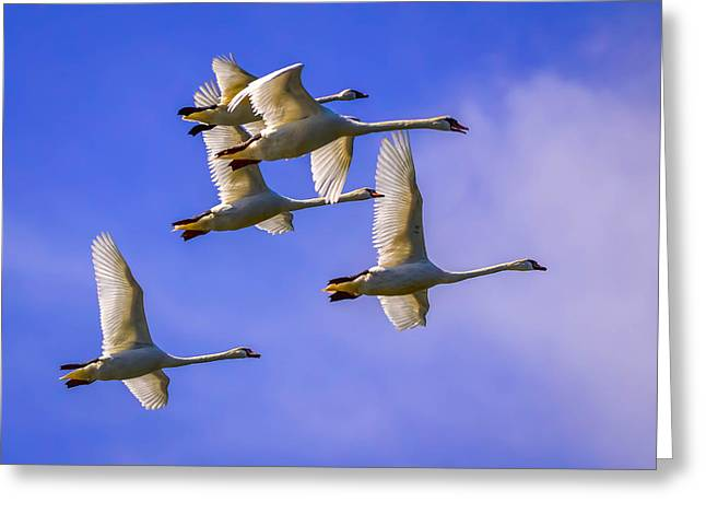 Synchronous Greeting Cards - Forever Flight Greeting Card by Brian Stevens